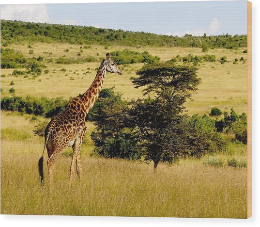 Masaai Giraffe Wood Print