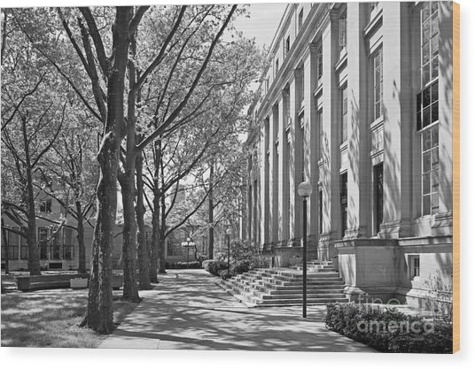 Massachusetts Institute Of Technology Eastman Labs Wood Print
