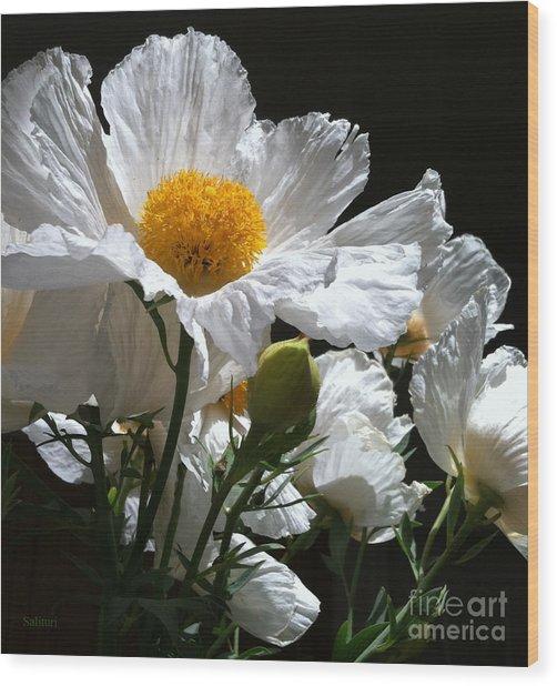 Matilija Poppies Wood Print by Gail Salitui