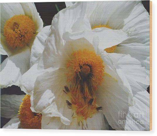 Matilija Poppy Wood Print by Gail Salitui