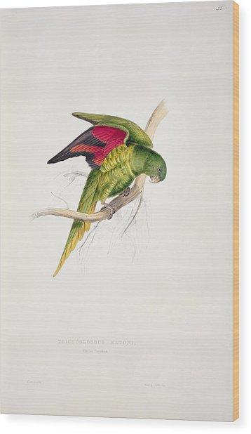 Matons Parakeet Wood Print