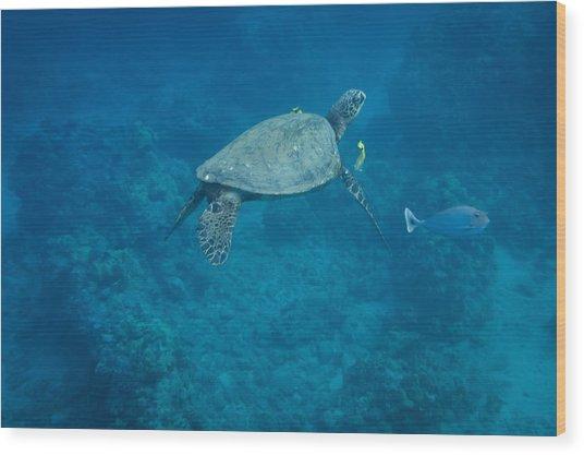 Maui Sea Turtle And Unicorn Fish Wood Print