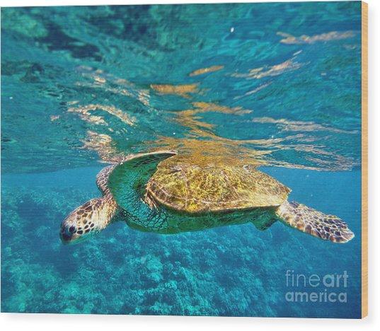 Maui Sea Turtle Wood Print