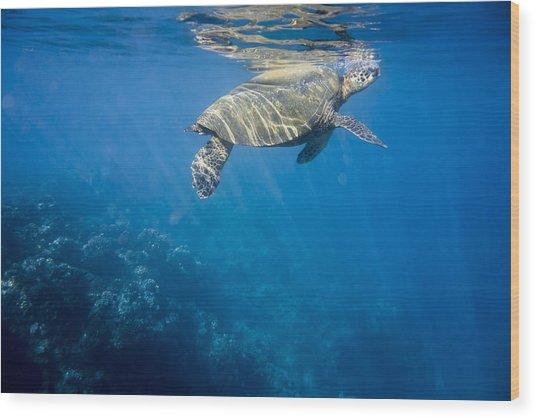 Maui Sea Turtle Takes A Breath At The Surface Wood Print