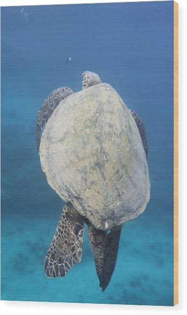 Maui Sea Turtle Vertical Wood Print