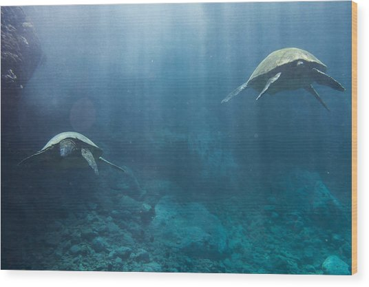 Maui Sea Turtles Farewell Wood Print
