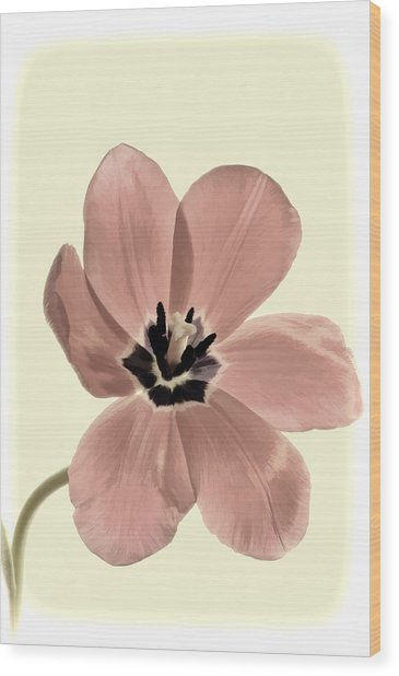 Mauve Tulip Transparency Wood Print