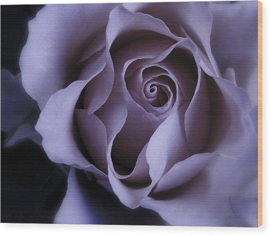 May Dreams Come True - Purple Pink Rose Closeup Flower Photograph Wood Print