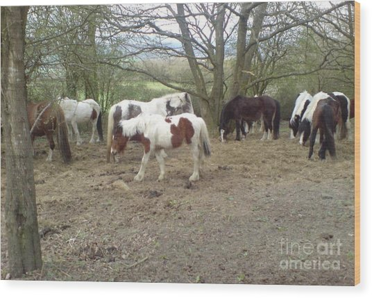 May Hill Ponies 2 Wood Print