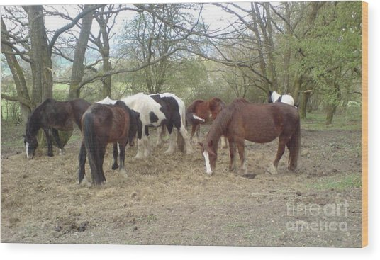 May Hill Ponies 3 Wood Print