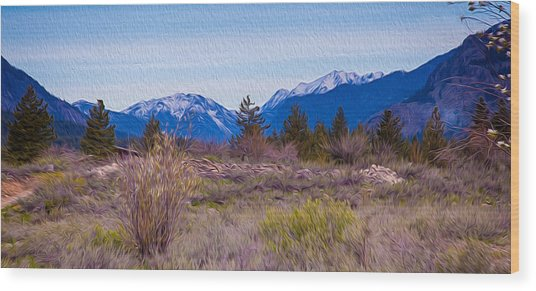 Mazama From Wolf Creek Wood Print