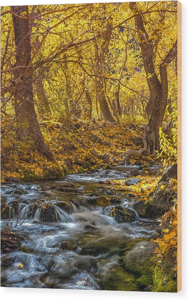 Mcgee Creek Wood Print