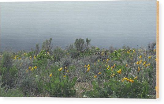 Meadow Fog Wood Print
