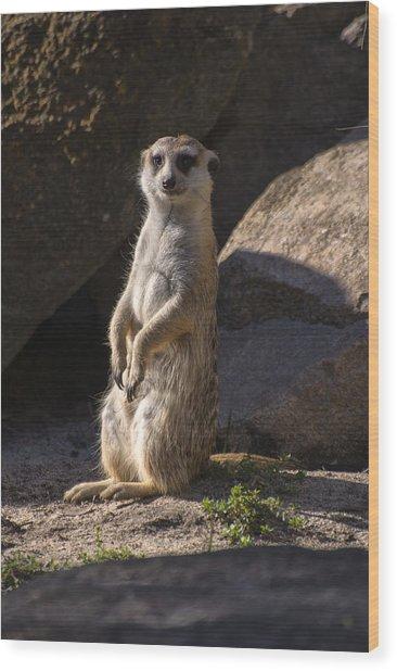 Meerkat Looking Forward Wood Print