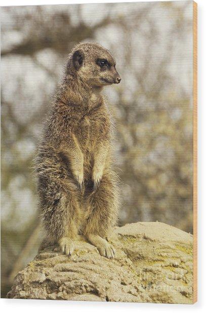 Meerkat On Hill Wood Print