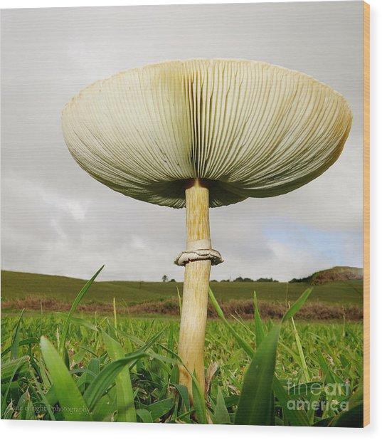 Mega Mushroom Iv Wood Print
