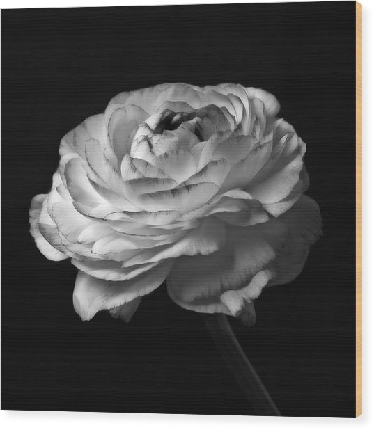 Black And White Roses Flowers Art Work Macro Photography Wood Print