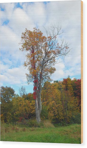 Memories Wood Print by June Lambertson