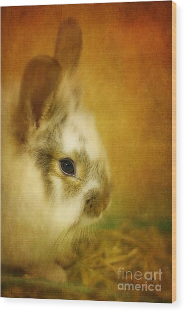 Wood Print featuring the photograph Memories Of Watership Down by Lois Bryan