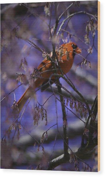 Memphis Red Bird Wood Print by Barry Jones
