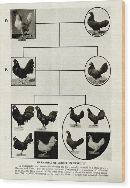 Mendelian Inheritance Chart Wood Print