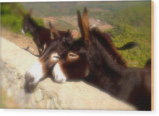 Menorcan Donkeys Wood Print