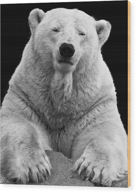 Mercedes The Polar Bear Wood Print
