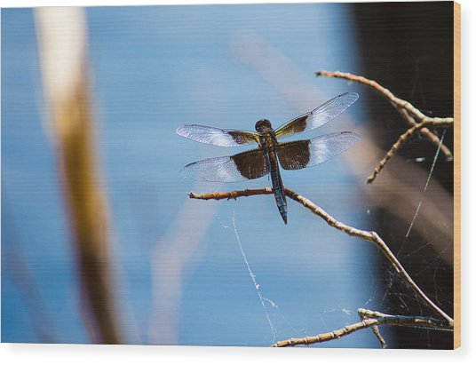 Merrill Creek Dragonfly Wood Print