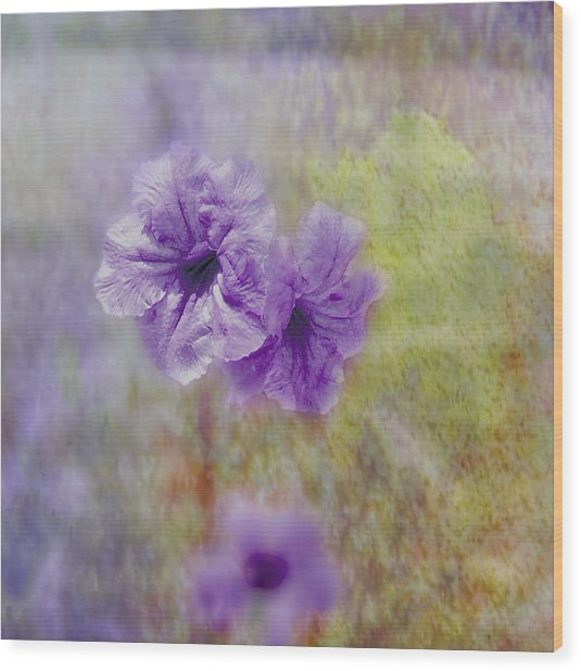 Wood Print featuring the photograph Mexican Petunia by Judy Hall-Folde