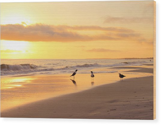 Mexico Beach Sand Pipers Wood Print