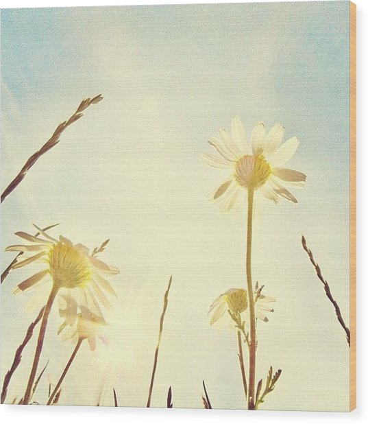 #mgmarts #daisy #all_shots #dreamy Wood Print