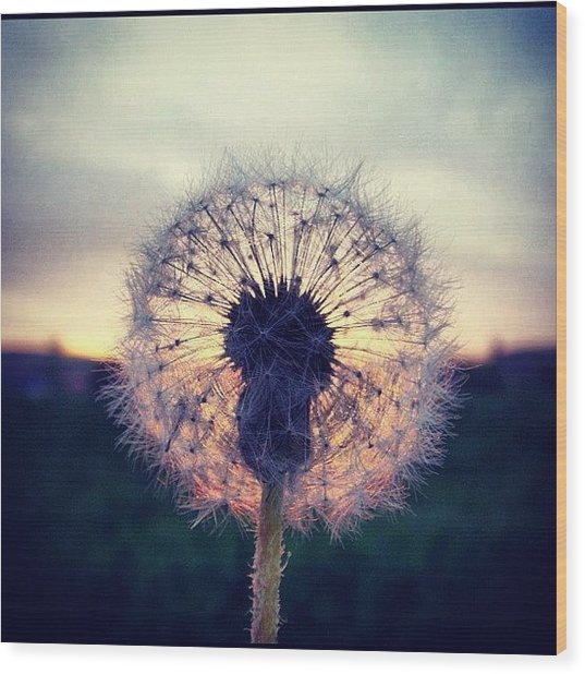 #mgmarts #dandelion #sunset #simple Wood Print