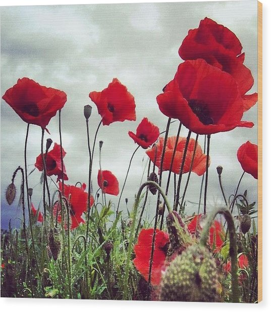 #mgmarts #poppy #weed #flower #spring Wood Print