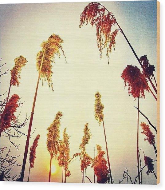 #mgmarts #sunset #bright #beautiful Wood Print