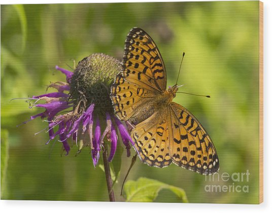 Michigan Fritillary Wood Print