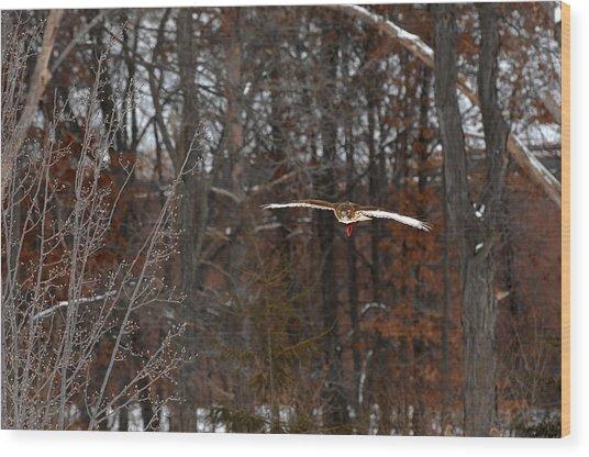 Michigan Redtail Hawk Wood Print