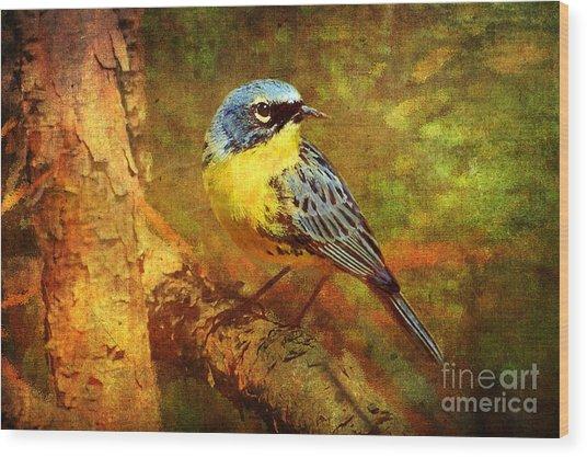 Michigans Rare Kirtlands Warbler Wood Print