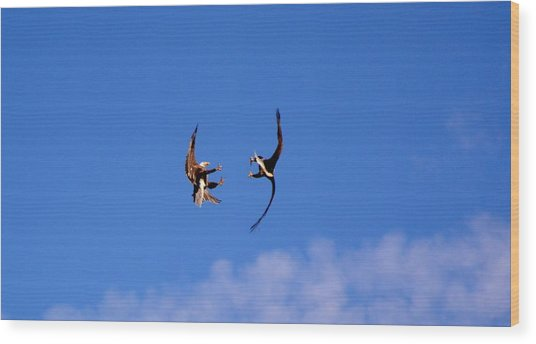 Mid Air Mating Dance Wood Print