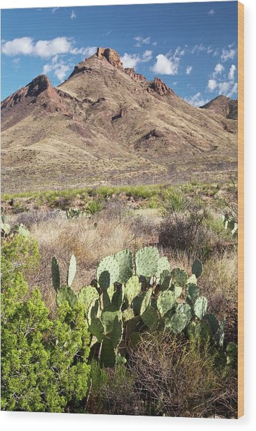Mid-altitude Desert Wood Print by Bob Gibbons/science Photo Library