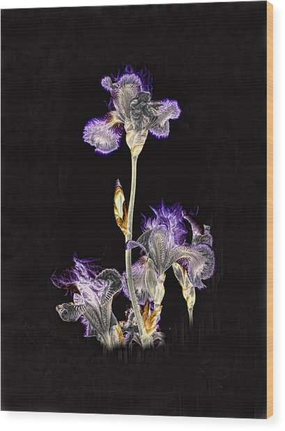 Midnight Iris Wood Print