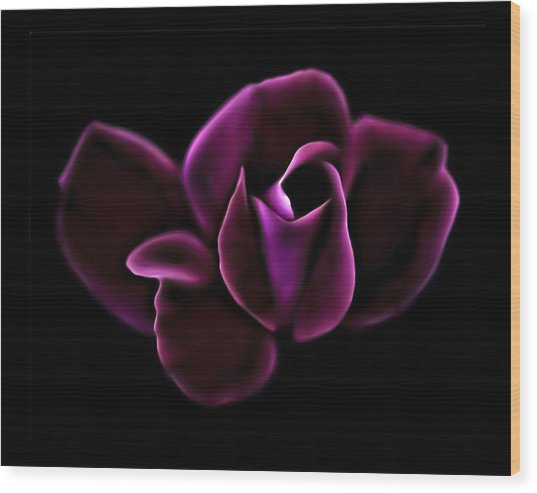 Midnight Knockout Rose Wood Print