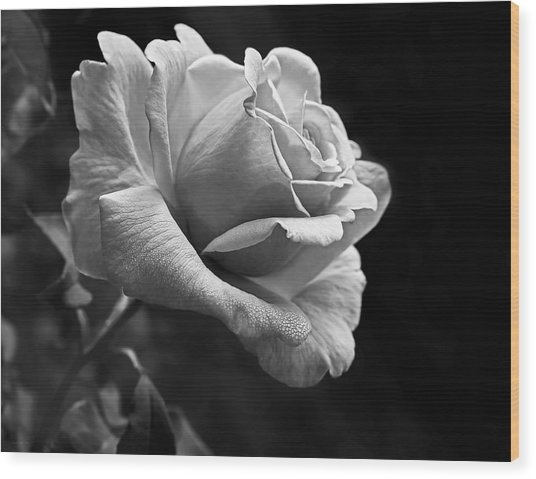 Midnight Rose In Black And White Wood Print