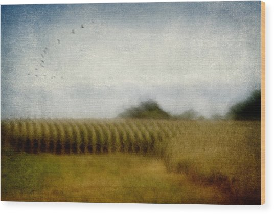 Midwestern Drive-by Corn Fields Wood Print