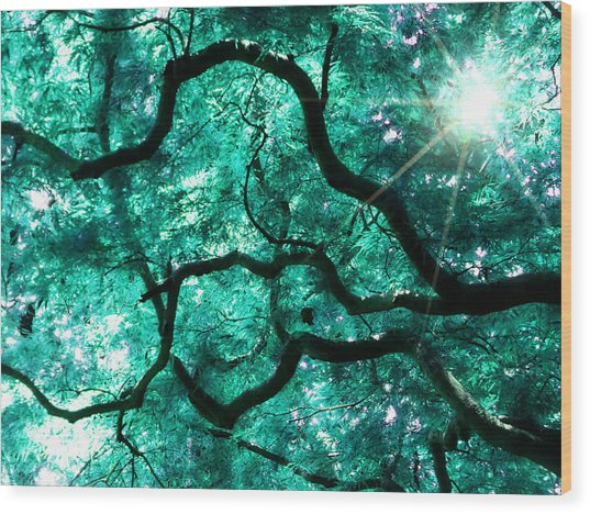 Mighty Branches Wood Print