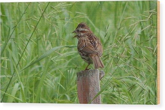 Mighty Sparrow Wood Print