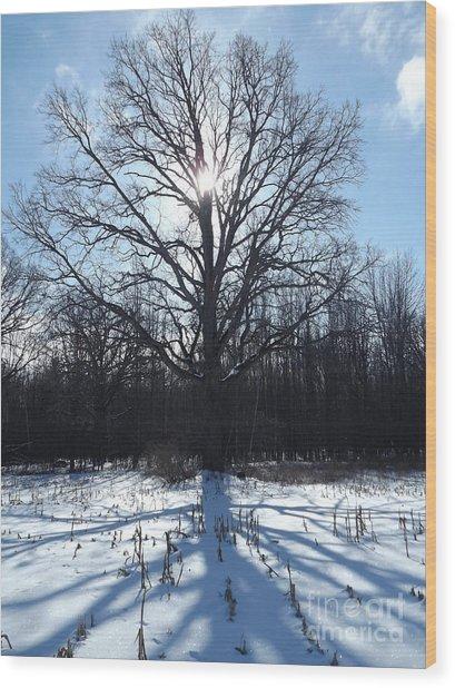 Mighty Winter Oak Tree Wood Print