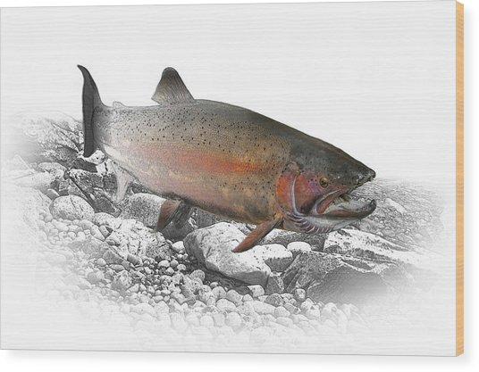 Migrating Steelhead Rainbow Trout Wood Print