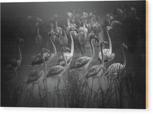 Migrations ! Wood Print
