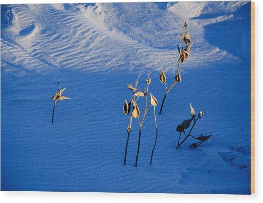 Milkweeds In The Snow Wood Print by Dan  Meylor