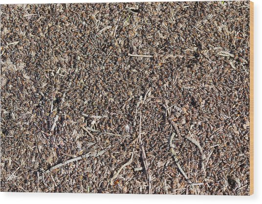 Million  Red Ants  Wood Print